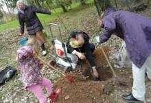 einpflanzen eines baumes